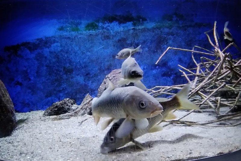 acquario-di-bolsena